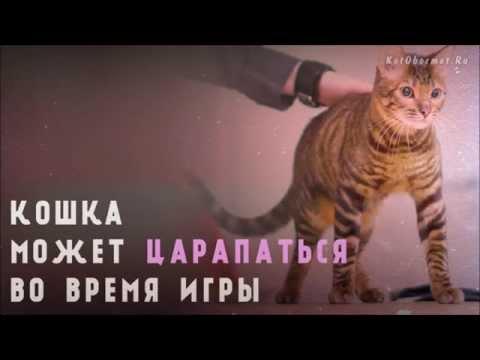 Как отучить котенка кусать и царапать