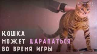 Как отучить котенка кусаться и царапаться - 10 советов(В этом видео мы дадим несколько советов о том, как отучить котенка кусаться и царапаться. Маленький котенок..., 2014-07-07T21:12:13.000Z)