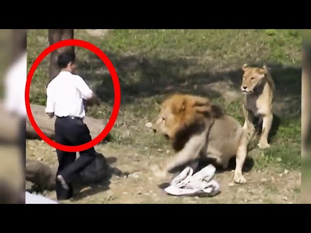 رجل سكران دخل وسط الاسود في حديقة الحيوانات zoo _ مش معقول