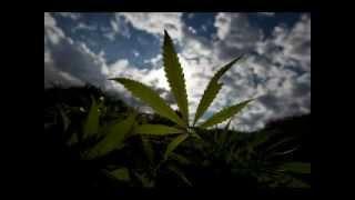 Песня про молодого наркомана