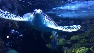 일산 아쿠아플라넷 바다코끼리와 수중생물 모음