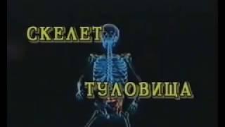 03 Скелет туловища