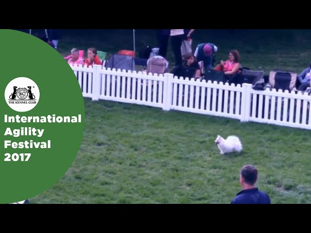 Young Handler of the Year - Small (+12) | International Agility Festival 2017