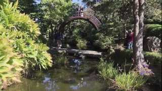 Eat, Play, Chill in the Japanese Tea Garden