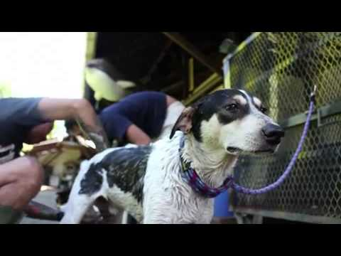 Jakarta Animal Aid Network - Saving Dogs