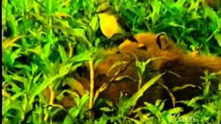 Amazônia Indomável {Fascículo 12} Oceano Verde