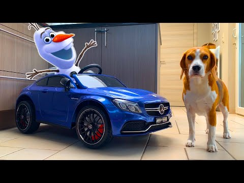 Toy Car Surprise for Frozen Olaf | Funny Dogs Louie and Marie |Real Life Animation