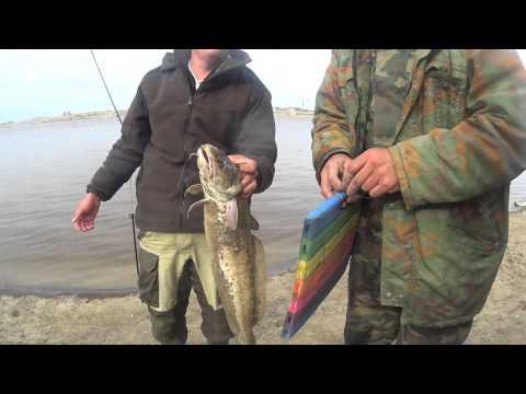 омская рыбалка налим
