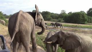 Great Moment with Elephant herd