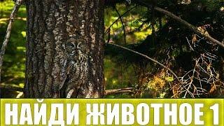 Найди животных ИГРА НАЙДИ ЖИВОТНЫХ Найди животное 1 Найди зверей  Найди спрятанных животных