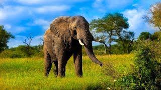 Животные Африки. Изучаем названия животных по-английски. Часть 1.