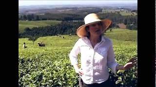 Lost Malawi Tea