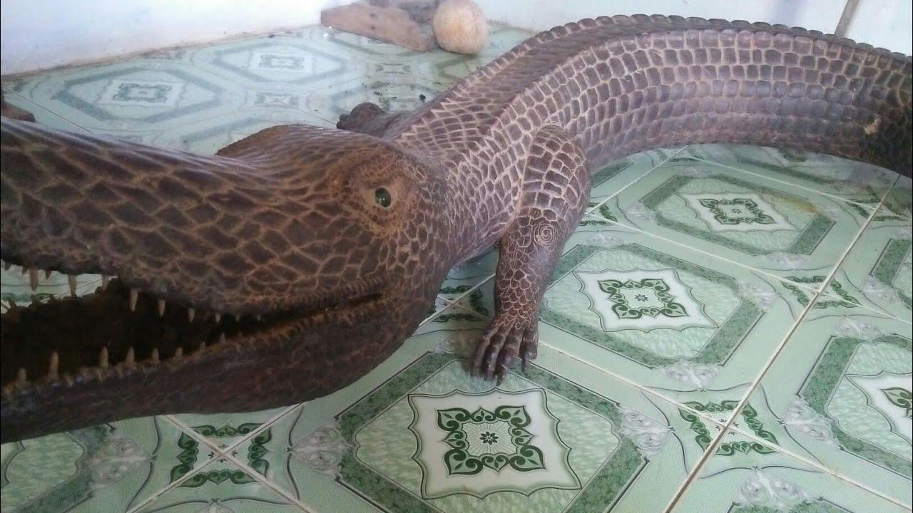 Giới Thiệu Em Pet Cá Sấu Bá Đạo Nuôi Trong Nhà.