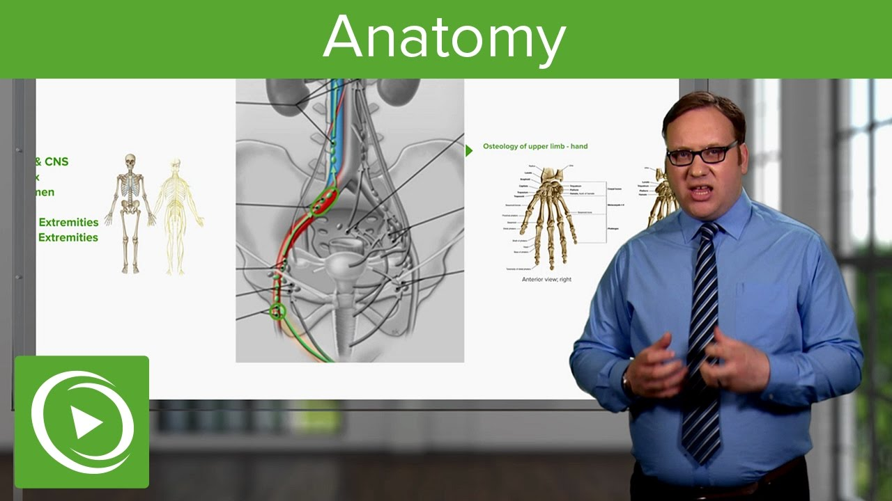 Anatomy – Course Preview | Lecturio