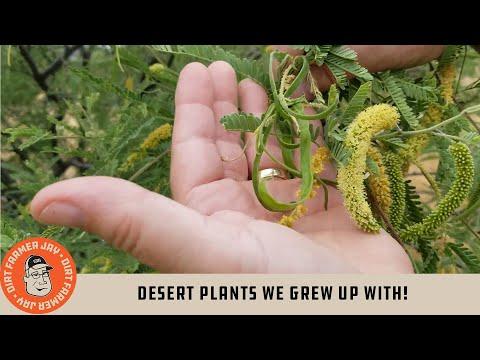 Desert Plants We Grew Up With!