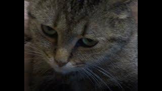 кошка облизывается и делает удивительное лицо