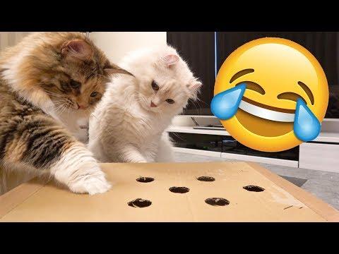 猫のモグラ叩きが必死で可愛すぎるwww