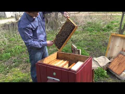 Курс видео — лекций Пчеловодство для начинающих