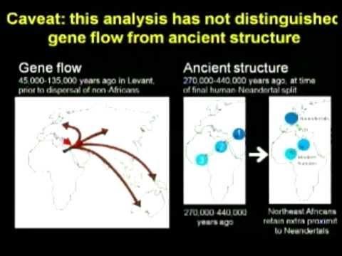 Human Degeneracy into Neandertals, The Forgotten Gene Flow