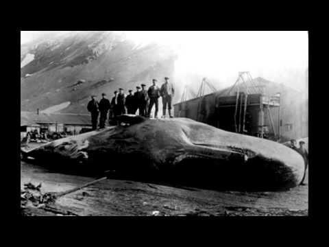 Человек в желудке у кита.