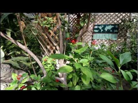 San Antonio's Zoo, Texas, USA