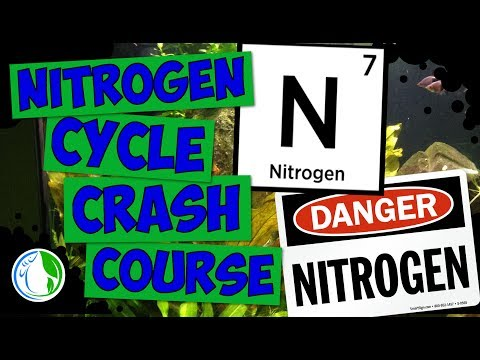 Nitrogen Cycle Crash Course Tutorial - Fish Tank Nitrogen Cycle Explained 💦🐠