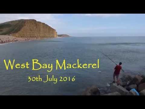 Huge Mackerel Shoals At West Bay July 2016