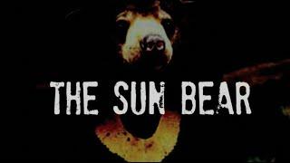 The Sun Bear 2