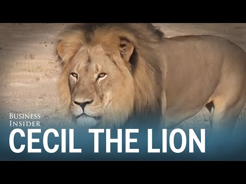 The tragic story of Cecil the Lion