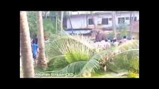 Elephant attack near chavakkad town- Part 3
