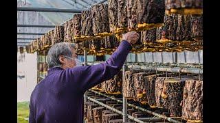 경남 진주 미천면에 위치한 희망빛 상황버섯농장, 신기한…