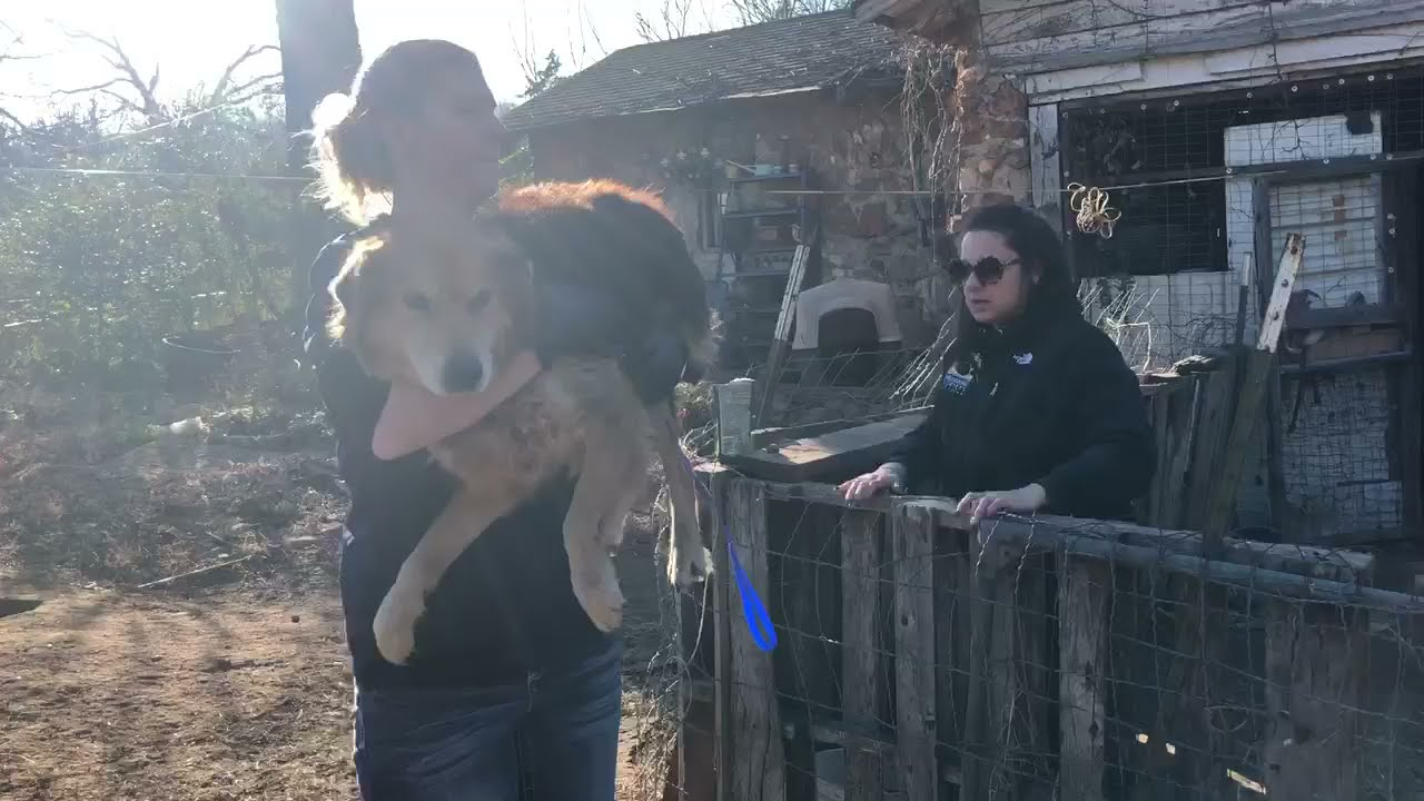 It's the first day of the rest of poor dog rescued