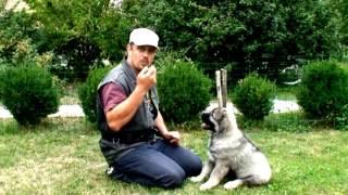 Обучение щенка команде сидеть