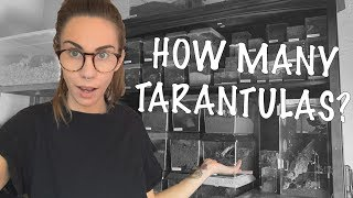 ALL my TARANTULAS! Full Collection Tour