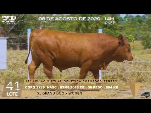LOTE 41 CORO 2289