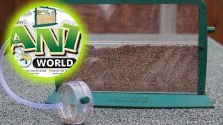 UNBOXING & SETTING UP | Ant World Ep 1