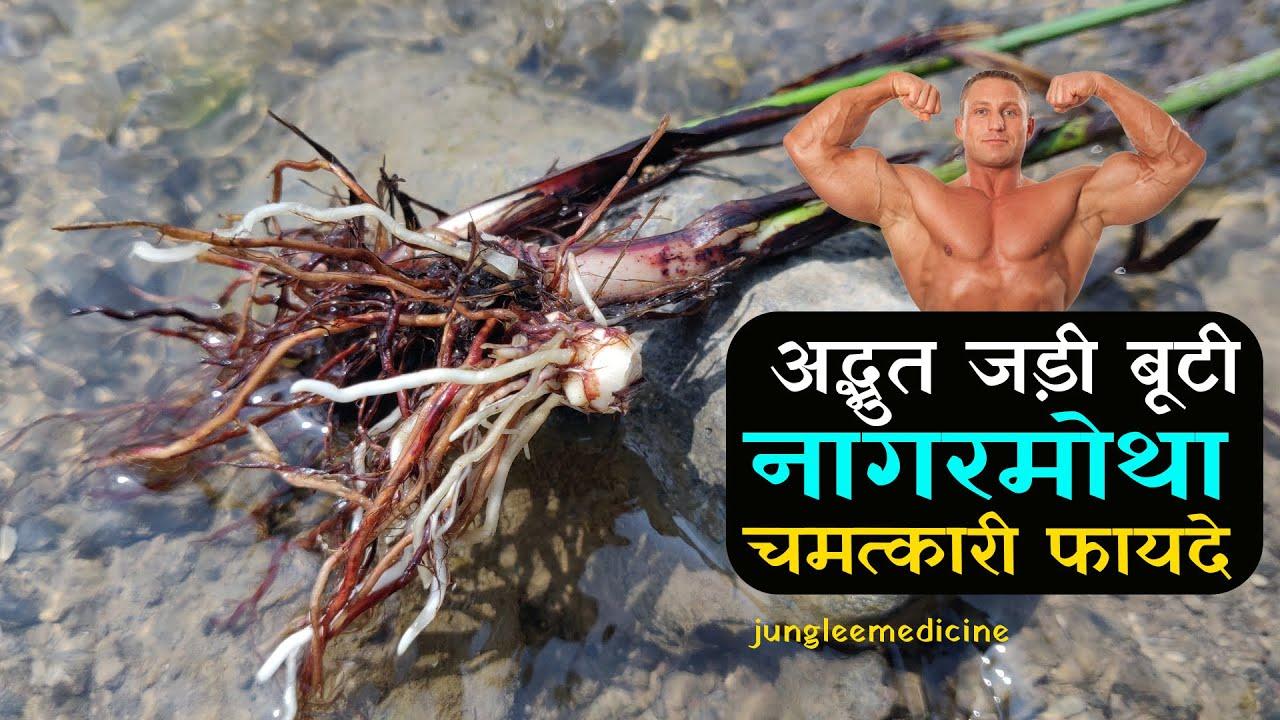 लाखों करोड़ों का फायदा करने वाली नागरमोथा के चमत्कारी फायदे और पहचान /Nagarmotha