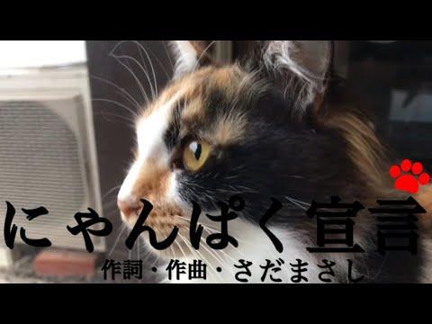 Ac ジャパン cm 猫