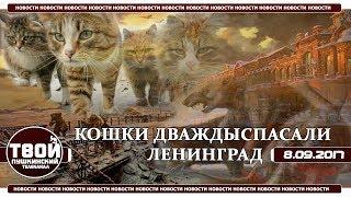 Кошки спасали Ленинград дважды