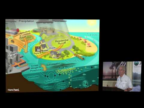 Duane DeFreese - Cleaning Florida's Water and Water Remediation Technology