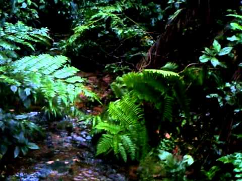Eco-tourism: Rainforest waterfall in Amazon