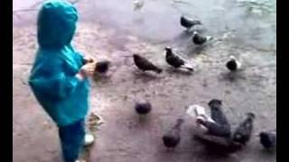 Kormim golubey