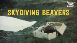 Skydiving Beavers Relocated via Planes