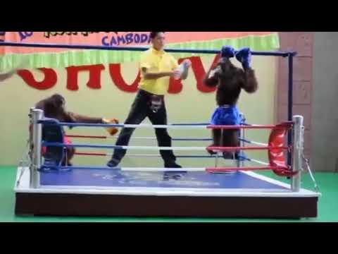 Trận Muay Thai đỉnh cao