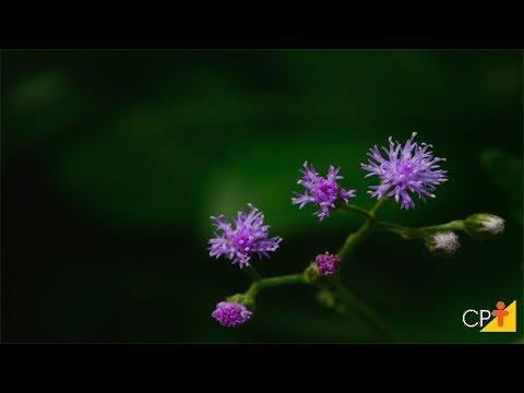 Clique e veja o vídeo Curso Produção Comercial de Plantas Medicinais - Pragas - Cursos CPT