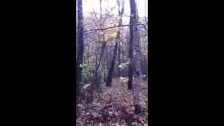пшеничный терьер лазает по деревьям