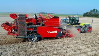 Potato Harvest | Claas Xerion 3300 VC & Dewulf RA2060 Trailed 2-row Sieving Harvester | De Visser