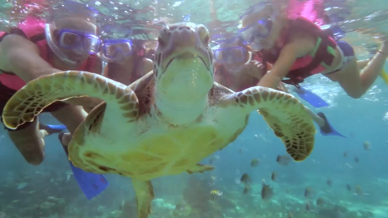Tour Snorkel   Xcaret México! Cancún Eco Park - YouTube