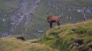 Дикие животные в горах Бучедж. Поход по Южным Карпатам.