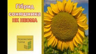 Подсолнух НК Неома в Украине